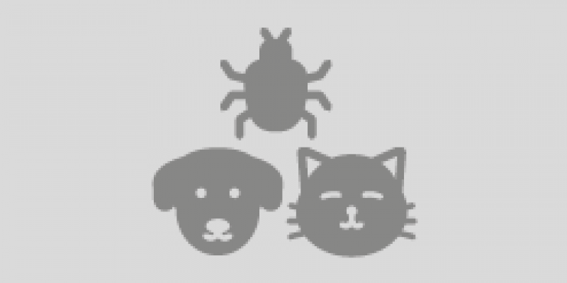 Dieren & insecten